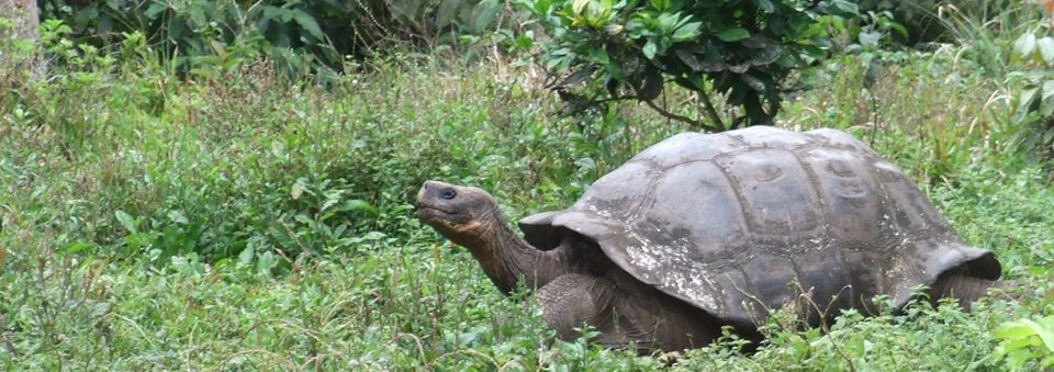 Galapagos Islands Volunteer Trip