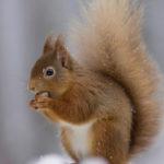 Cute photos of Wildlife have impact