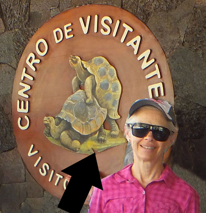 Chris at the Giant Tortoise Crianza in the Galapagos